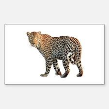 Beautiful wild safari leopard Decal