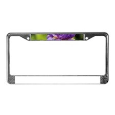 Purple Bearded Iris License Plate Frame