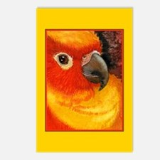 Sunny Conure Parrot Postcards (Package of 8)