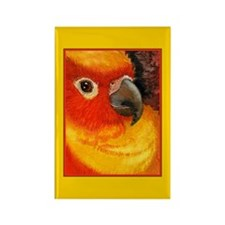 Sunny Conure Parrot Rectangle Magnet