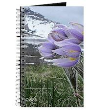 Pasque Flower Journal