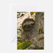 Sloth Greeting Cards