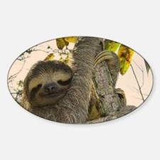 Sloth Decal