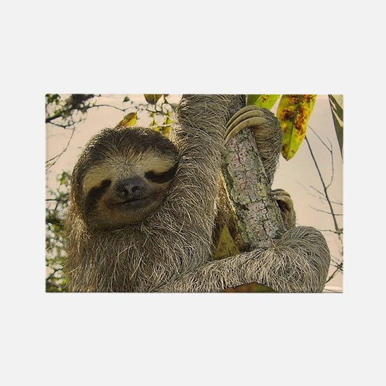 Sloth Magnets