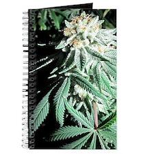 White Kush Bud Journal