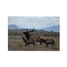 Rocky Mountain Elk Magnets