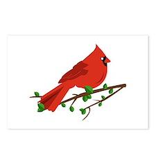 Cardinal Bird Postcards (Package of 8)