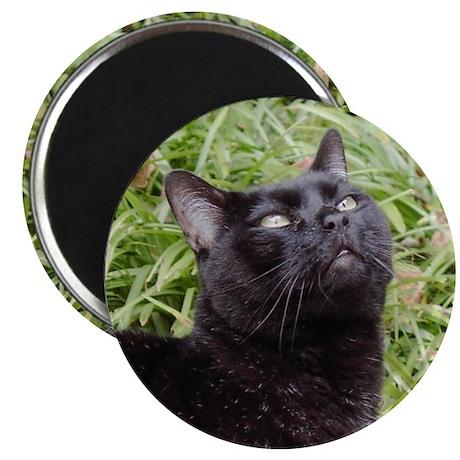 "Inspirational Black Cat 2.25"" Magnet (100 pack)"