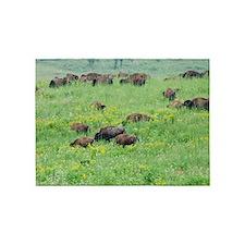 Spring Herd 5'x7'area Rug