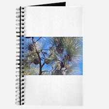 Torrey Pines Journal