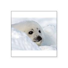 fur seal Sticker