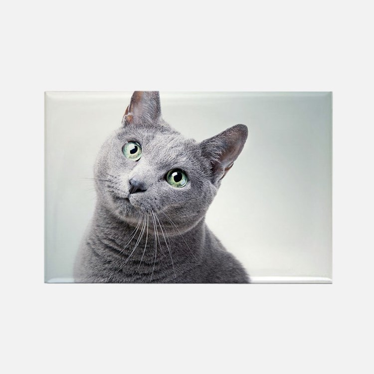 russian blue cat Magnets