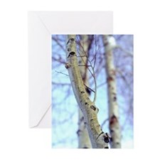 Aspen Greeting Cards (Pk of 10)