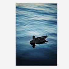 Blue Duck Postcards (Package of 8)
