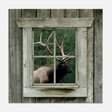 Old wood cabin window with bull elk Tile Coaster