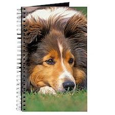 Sheltie portrait Journal