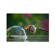 snail on a limb Magnets