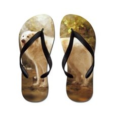 Great Pyrenees Alazon Flip Flops