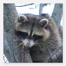 "Raccoon Square Car Magnet 3"" x 3"""