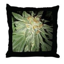 Cannabis Kush Plant Throw Pillow