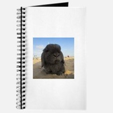 Lop Eared Beach Day Journal