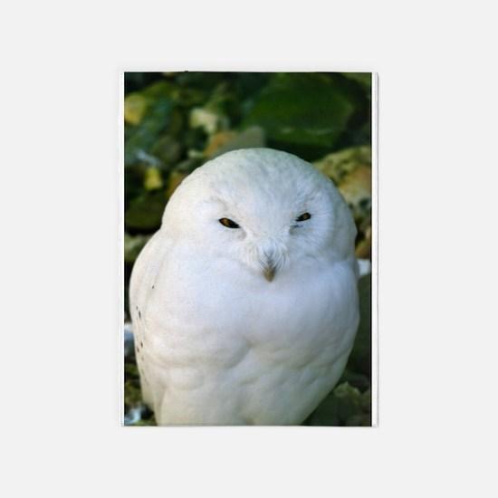 Snowy Owl 5'x7'Area Rug
