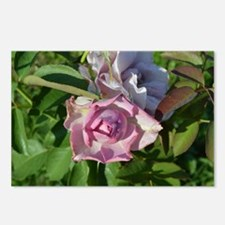 Heavenly Rose Up Close Postcards (Package of 8)