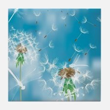 Dandelions and Dragonflies Tile Coaster