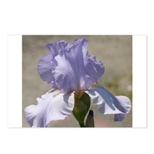 Lavender Iris Postcards (Package of 8)
