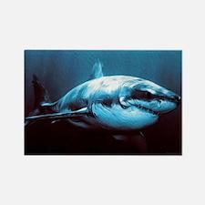 Battle-Scarred Great White Shark Rectangle Magnet