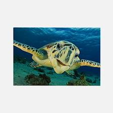 Sea Turtle Soar Rectangle Magnet