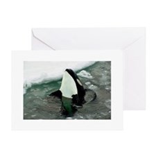Spy Hopping Orca Whale Greeting Card