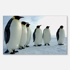 Emperor Penguins Council Decal