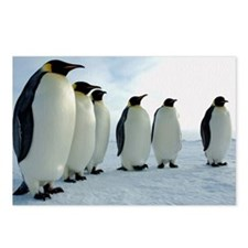 Emperor Penguins Council Postcards (Package of 8)