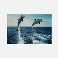 Twin Dolphins Rectangle Magnet