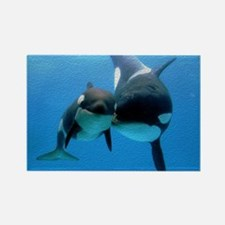 Orca Whale and Calf Rectangle Magnet