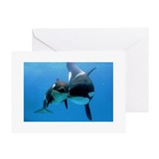 Orca Whale and Calf Greeting Card