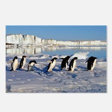Penguin Place Postcards (Package of 8)