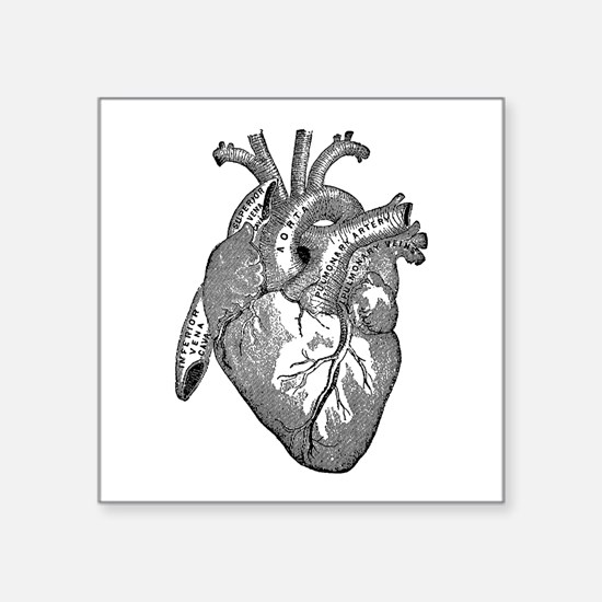 Anatomical Heart - Black Sticker