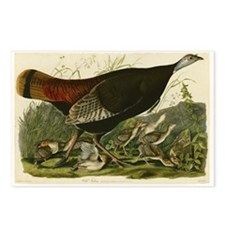 Audubon Wild Turkey Vintage Birds of America Postc