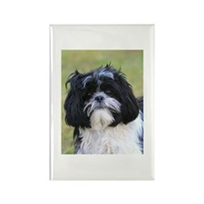 Little Shih Tzu Rectangle Magnet