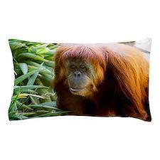 Orangutan Photo Pillow Case