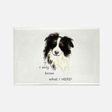 Watercolor Border Collie Dog Humor Herding Quote M
