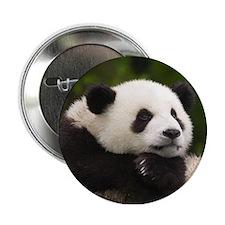 """panda 2.25"""" Button"""