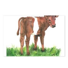 Calf Postcards (Package of 8)