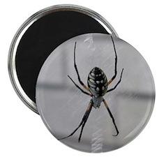 Creepy Spider 2.25