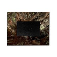 Redwood Tree Root Picture Frame
