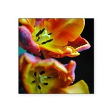 "Orange Parrot tulip flowers Square Sticker 3"" x 3"""