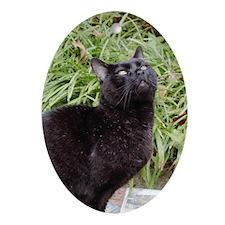 Inspirational Black Cat Oval Ornament