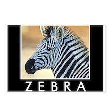 Zebra Postcards (Package of 8)